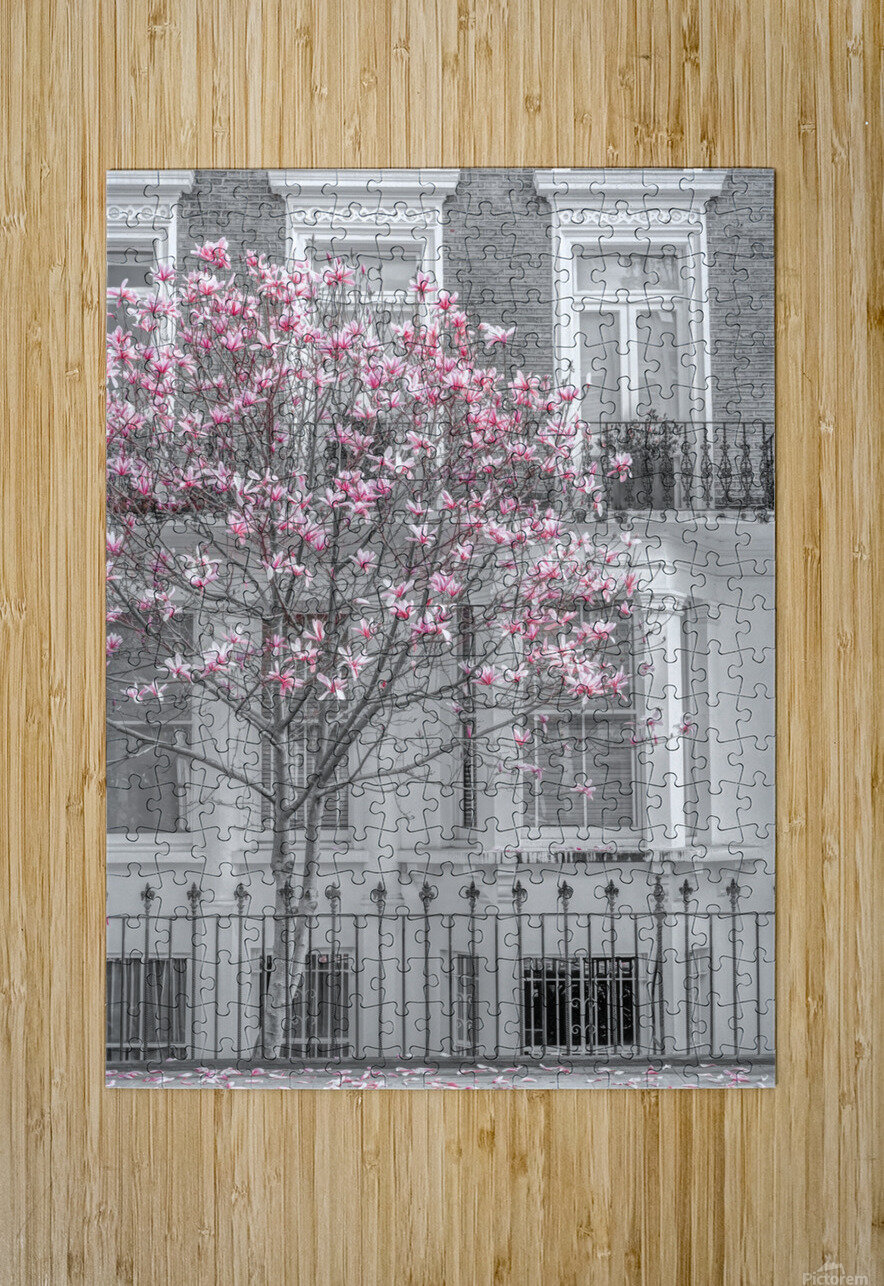 Magnolia tree outside house in London  HD Metal print with Floating Frame on Back