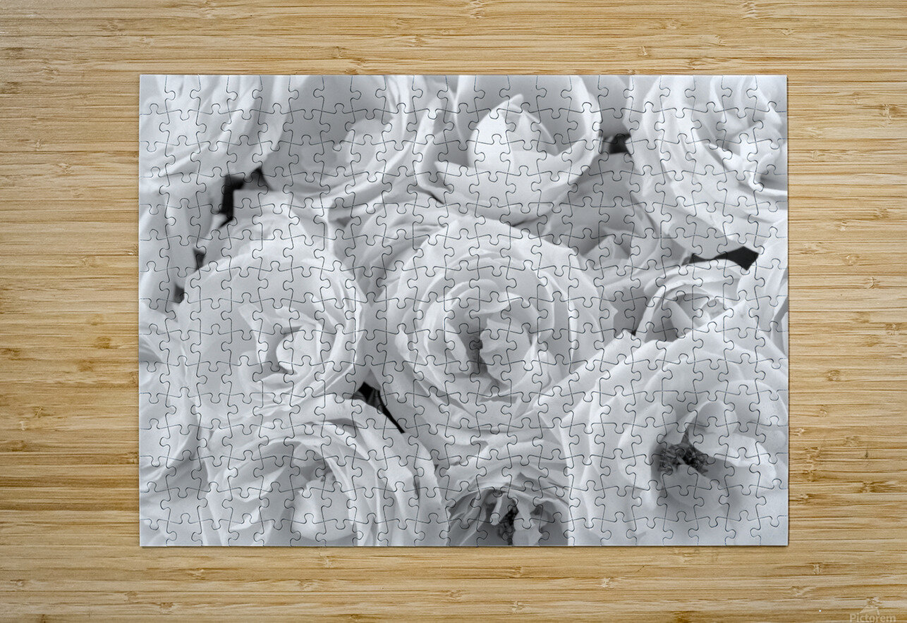 Full frame of roses  HD Metal print with Floating Frame on Back