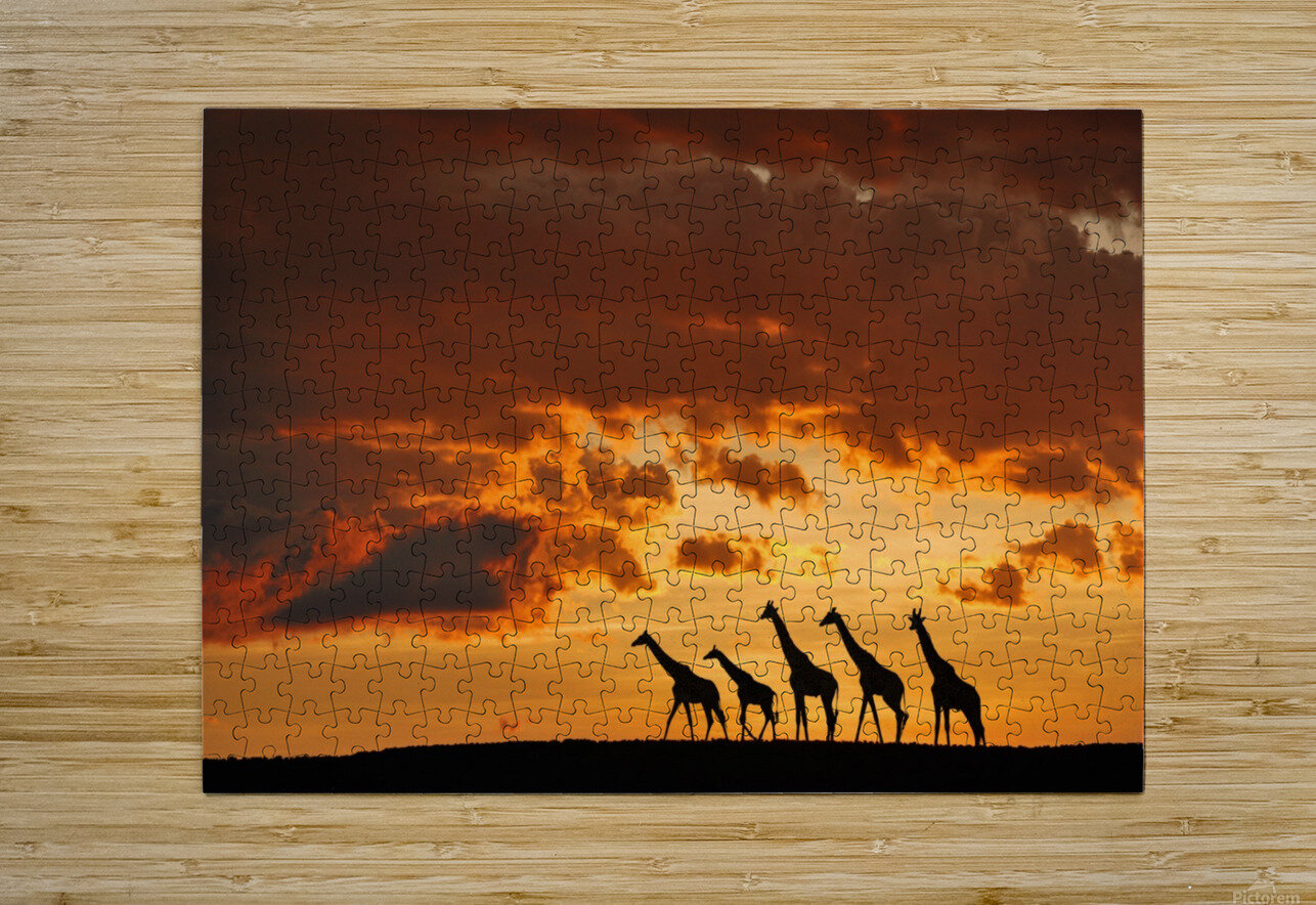 Five Giraffes  HD Metal print with Floating Frame on Back