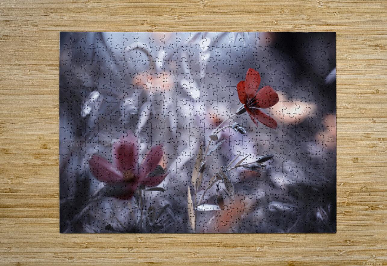 Une Fleur, une Histoire by Fabien BRAVIN   Impression métal HD avec cadre flottant sur le dos