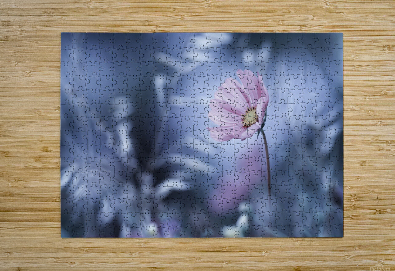 A Walk in Dreamland  HD Metal print with Floating Frame on Back