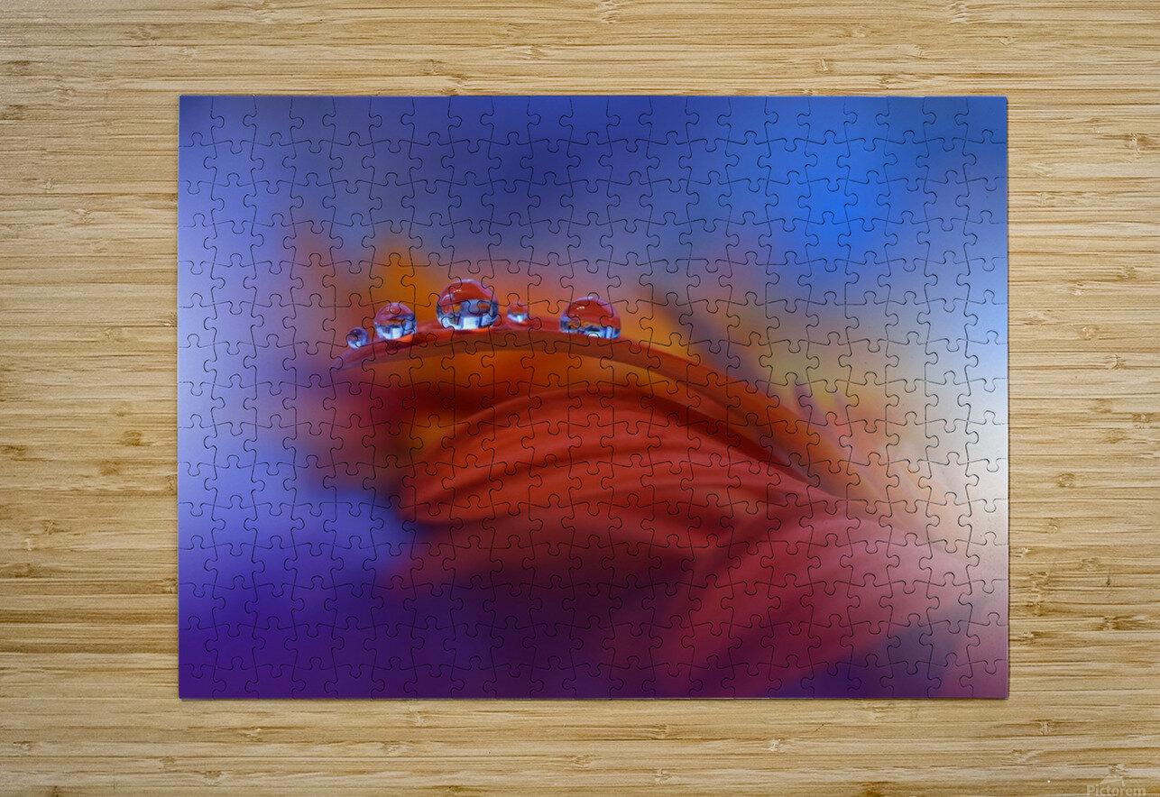 Metamorphosis by Juliana Nan   HD Metal print with Floating Frame on Back