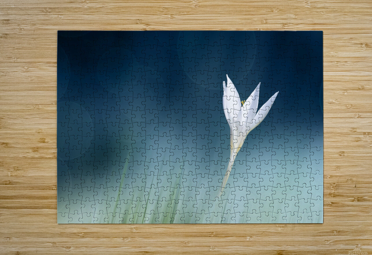 Lonely  HD Metal print with Floating Frame on Back
