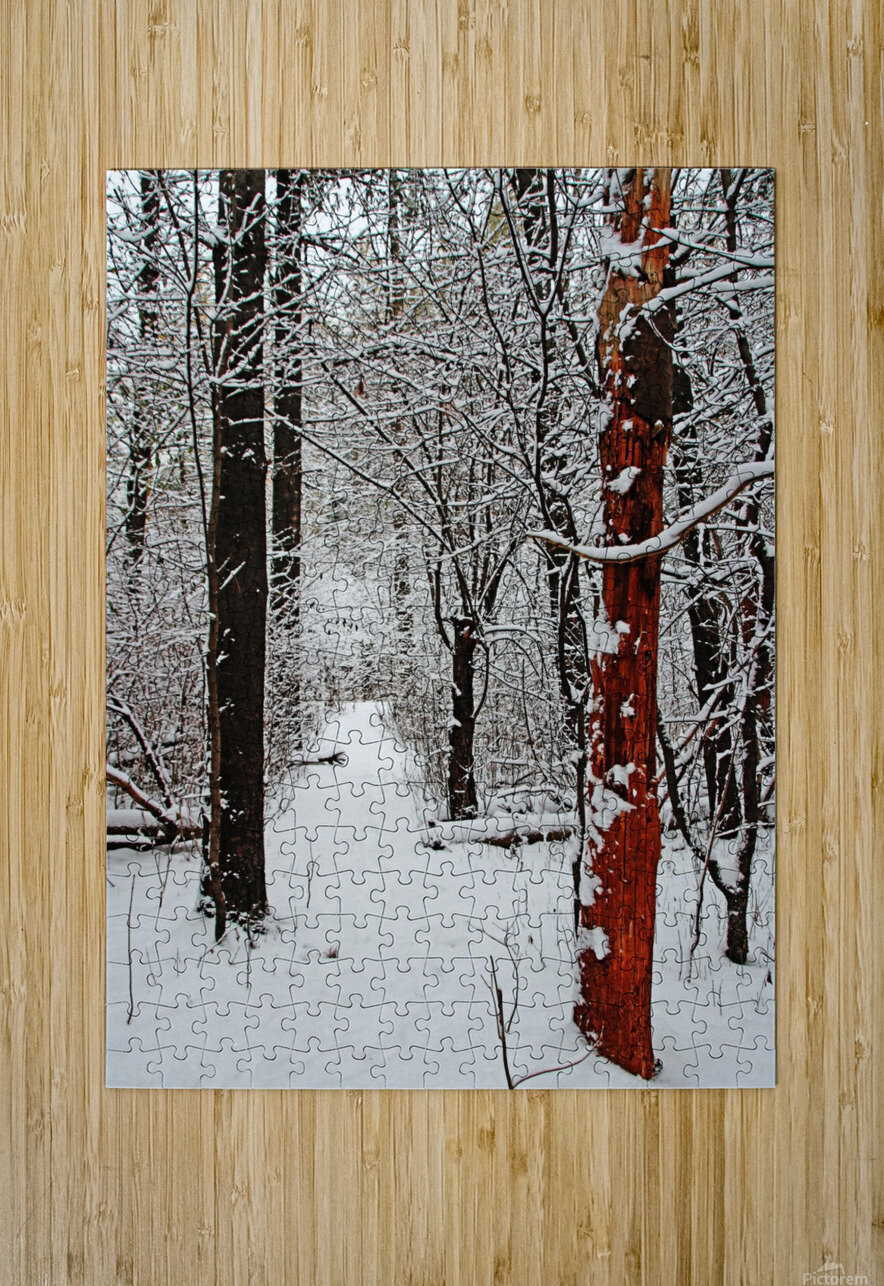 Decked In Snow  HD Metal print with Floating Frame on Back