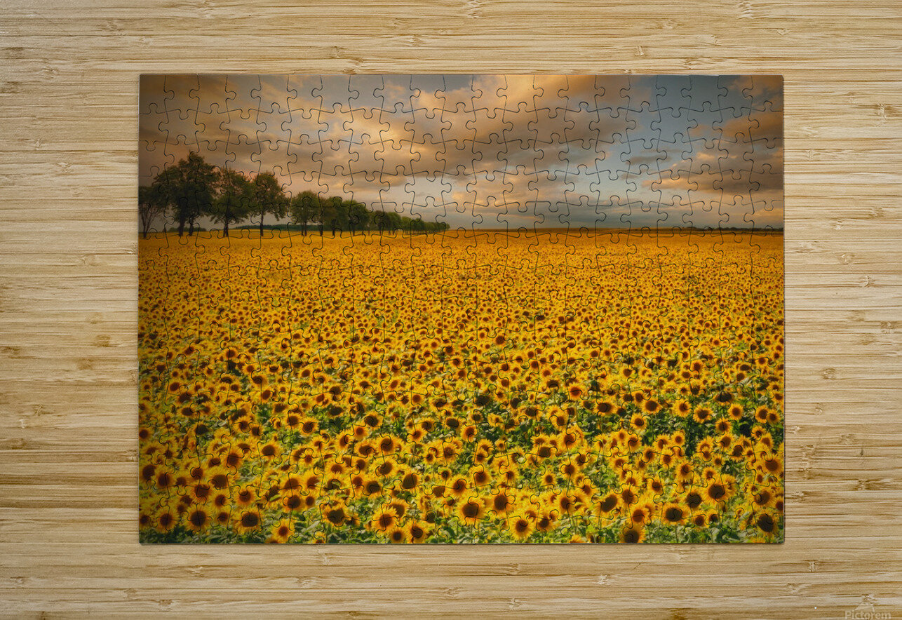 Sunflowers  HD Metal print with Floating Frame on Back