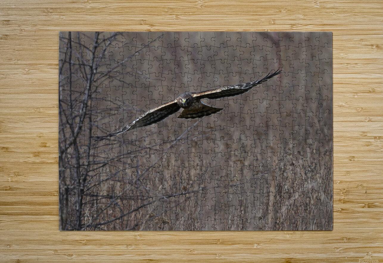 Wesley Allen Shaw 02102  HD Metal print with Floating Frame on Back