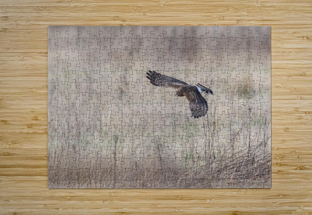 Wesley Allen Shaw 09335  HD Metal print with Floating Frame on Back