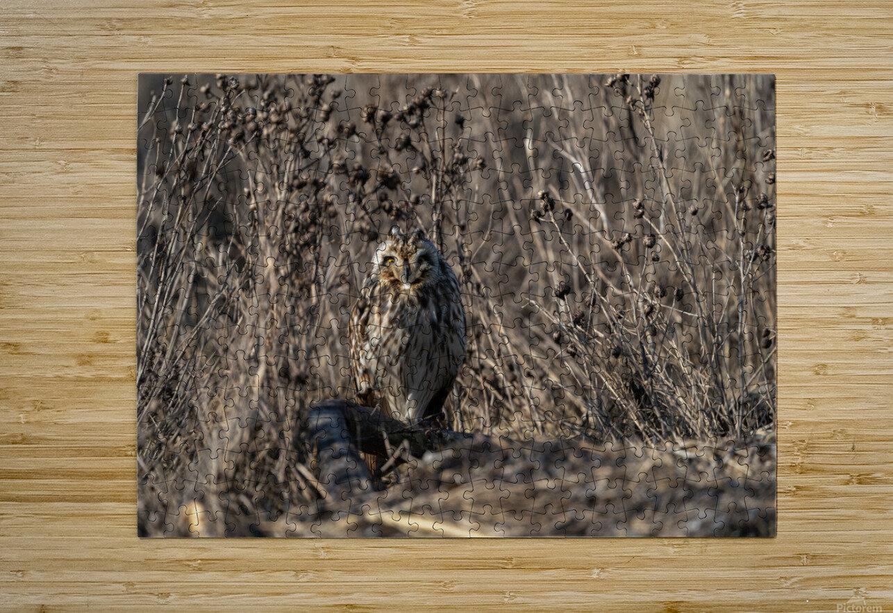 Wesley Allen Shaw 09496  HD Metal print with Floating Frame on Back