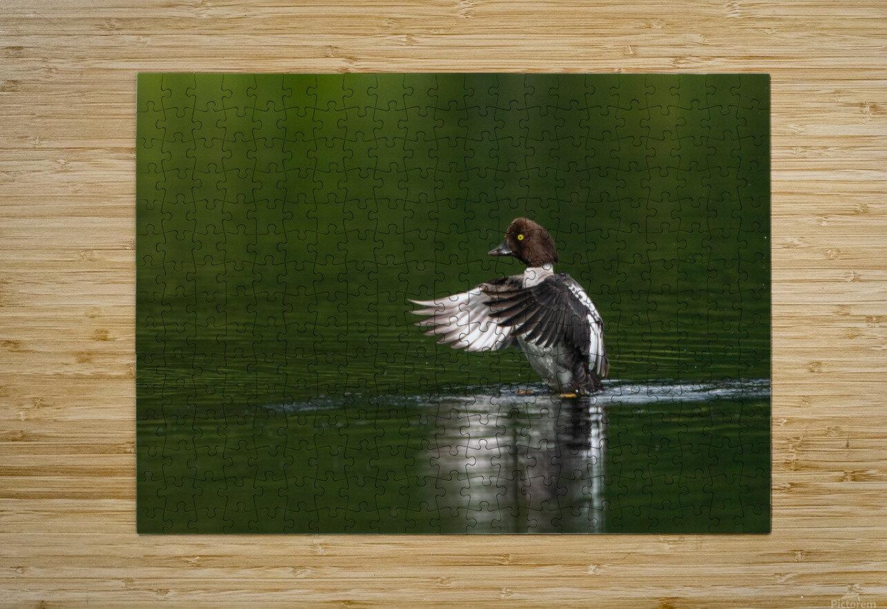 Wesley Allen Shaw 09988  HD Metal print with Floating Frame on Back