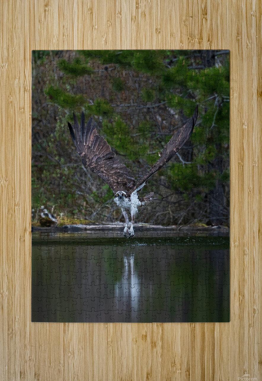 Wesley Allen Shaw 07518  HD Metal print with Floating Frame on Back