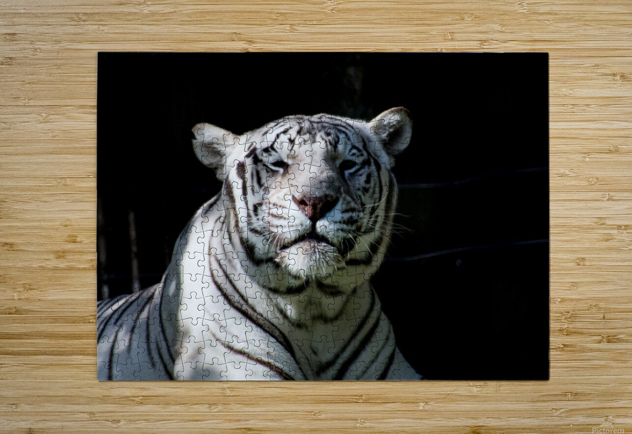 20181104 DSC 0151  3   HD Metal print with Floating Frame on Back