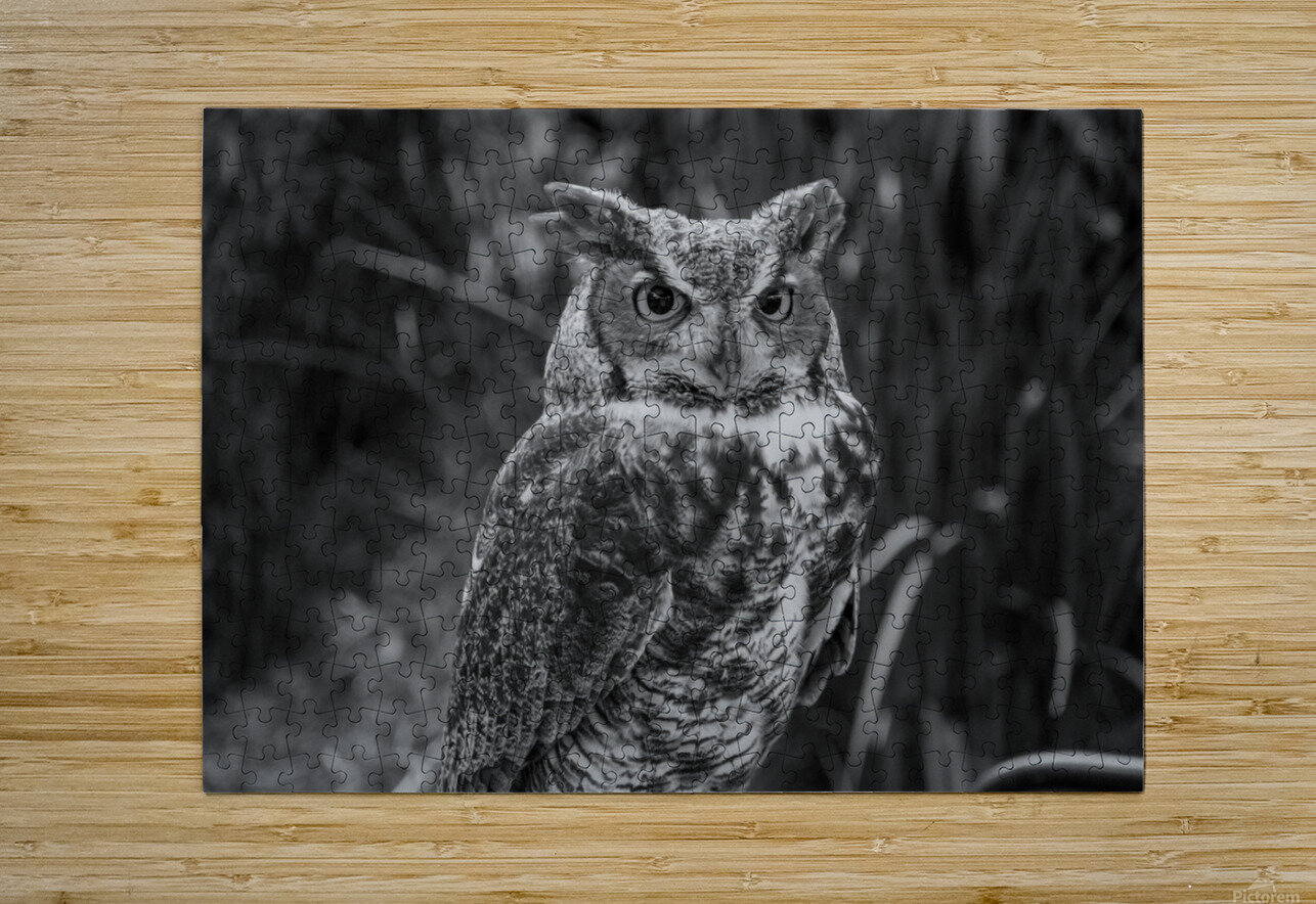 20181021 DSC 0154  2  1 2  HD Metal print with Floating Frame on Back