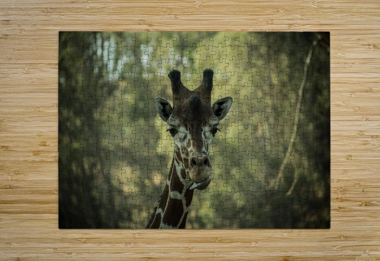 20181104 DSC 0164  3   HD Metal print with Floating Frame on Back