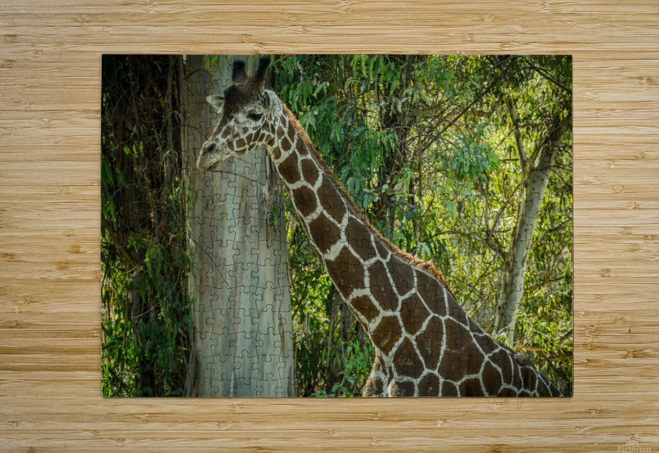 20181104 DSC 0203  3   HD Metal print with Floating Frame on Back