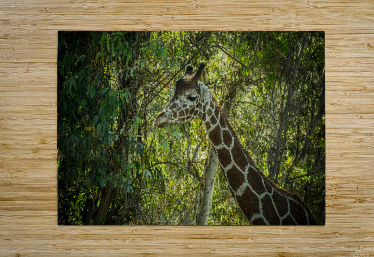 20181104 DSC 0202  3   HD Metal print with Floating Frame on Back