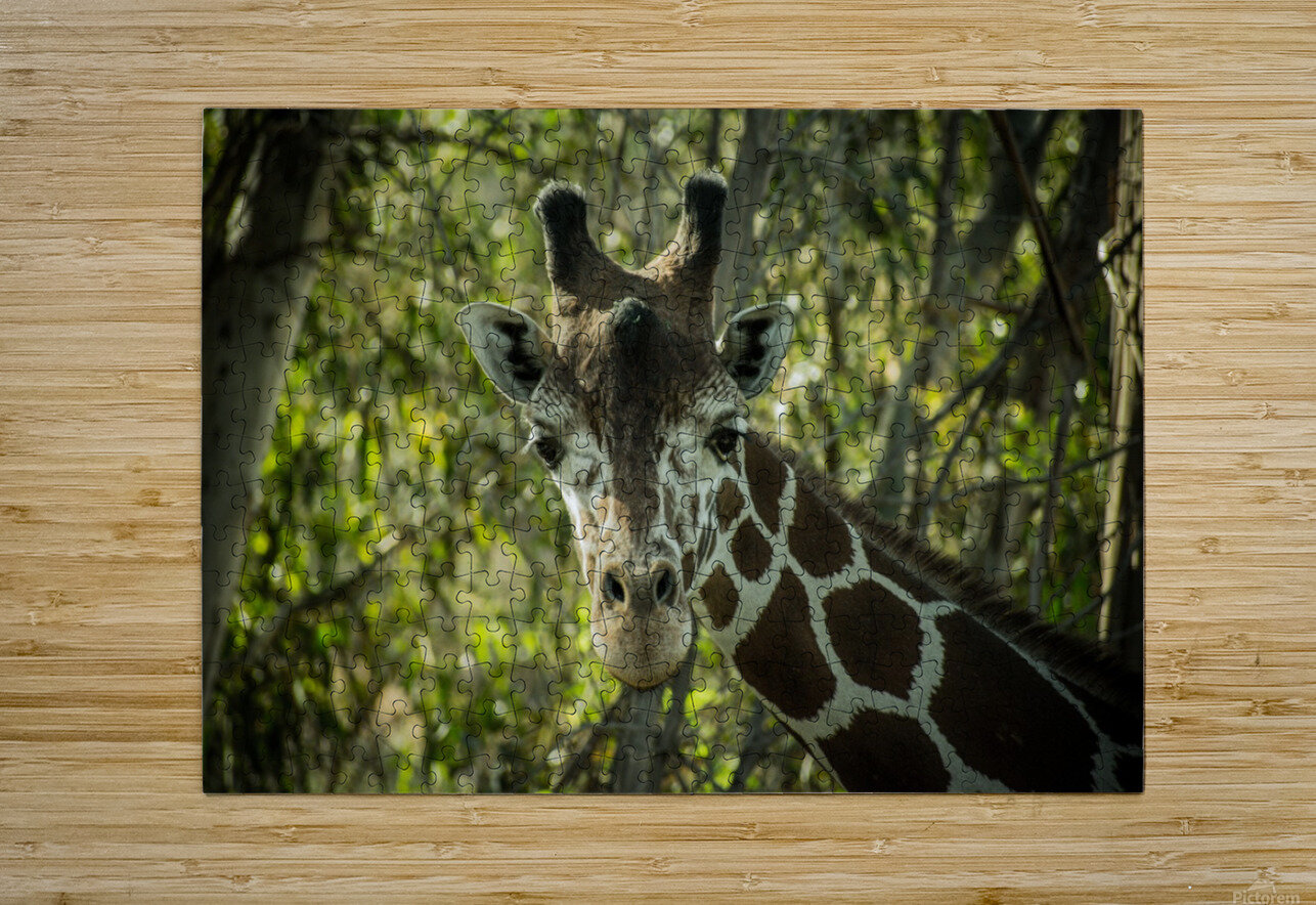 20181104 DSC 0191  3   HD Metal print with Floating Frame on Back