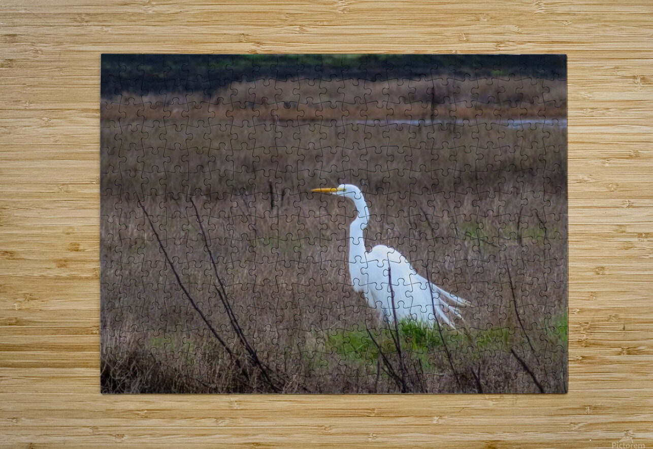 20190228 IMG 3441  HD Metal print with Floating Frame on Back