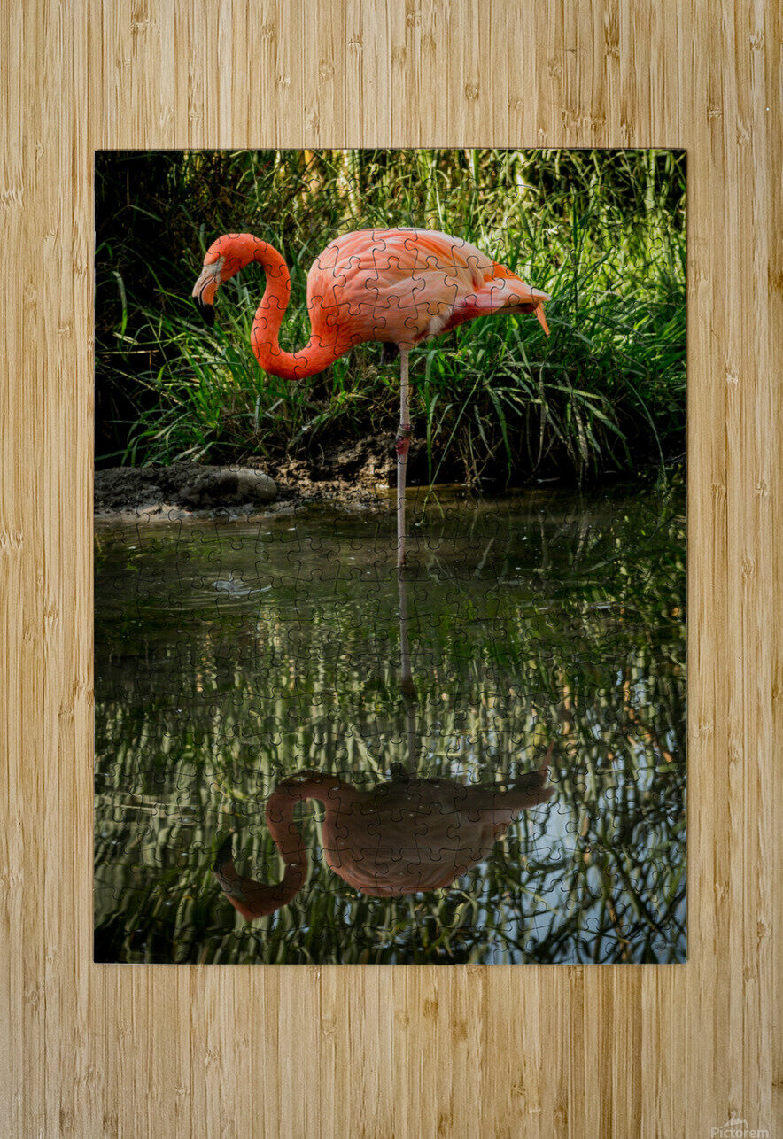 20201004 DSC 0252  HD Metal print with Floating Frame on Back