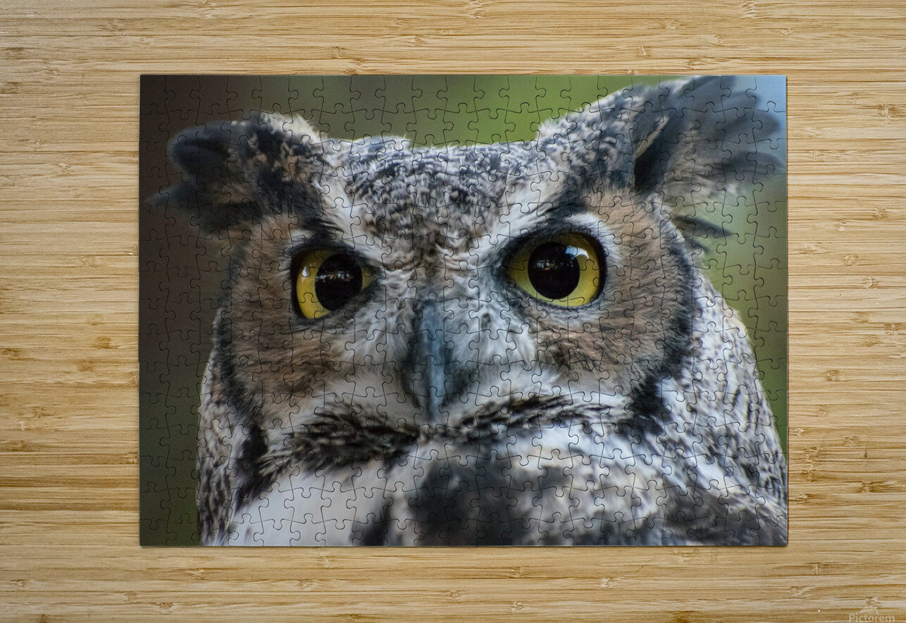 Owl  5  HD Metal print with Floating Frame on Back