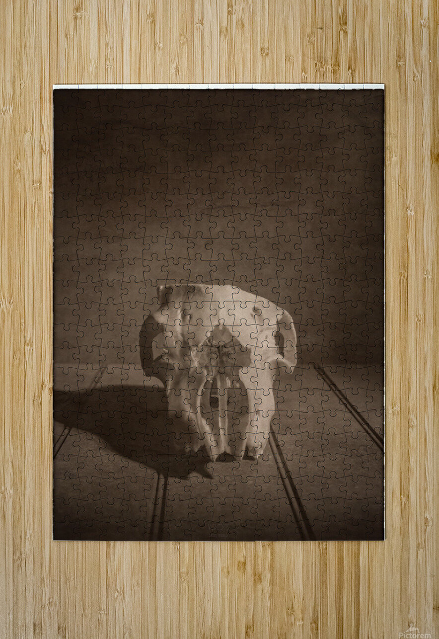 Cranium  HD Metal print with Floating Frame on Back