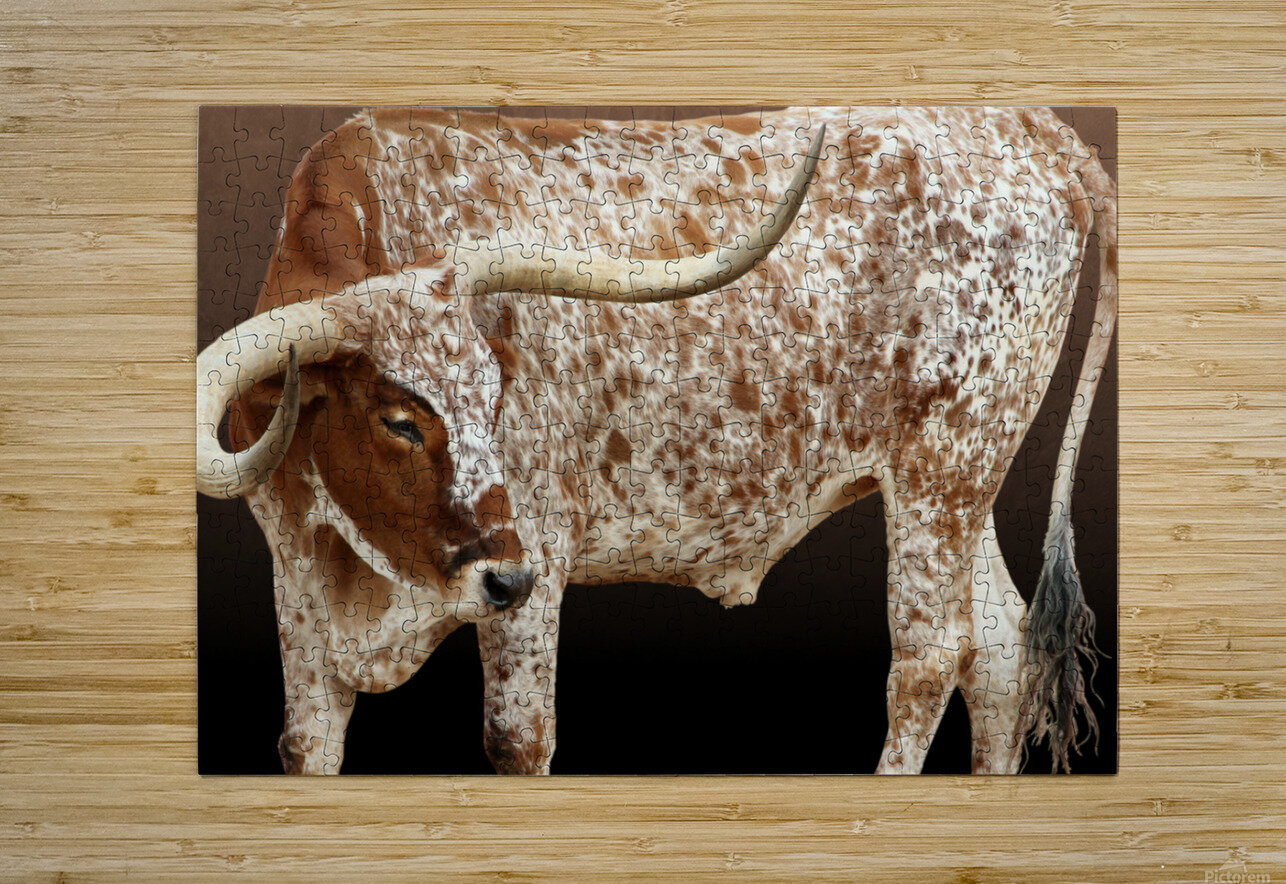 Longhorn Steer Profile 7x5  HD Metal print with Floating Frame on Back