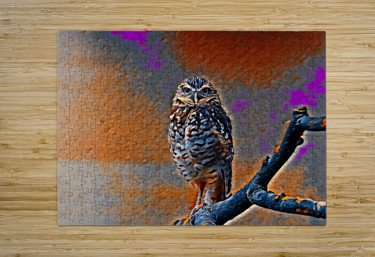 OWL - Stylized  HD Metal print with Floating Frame on Back