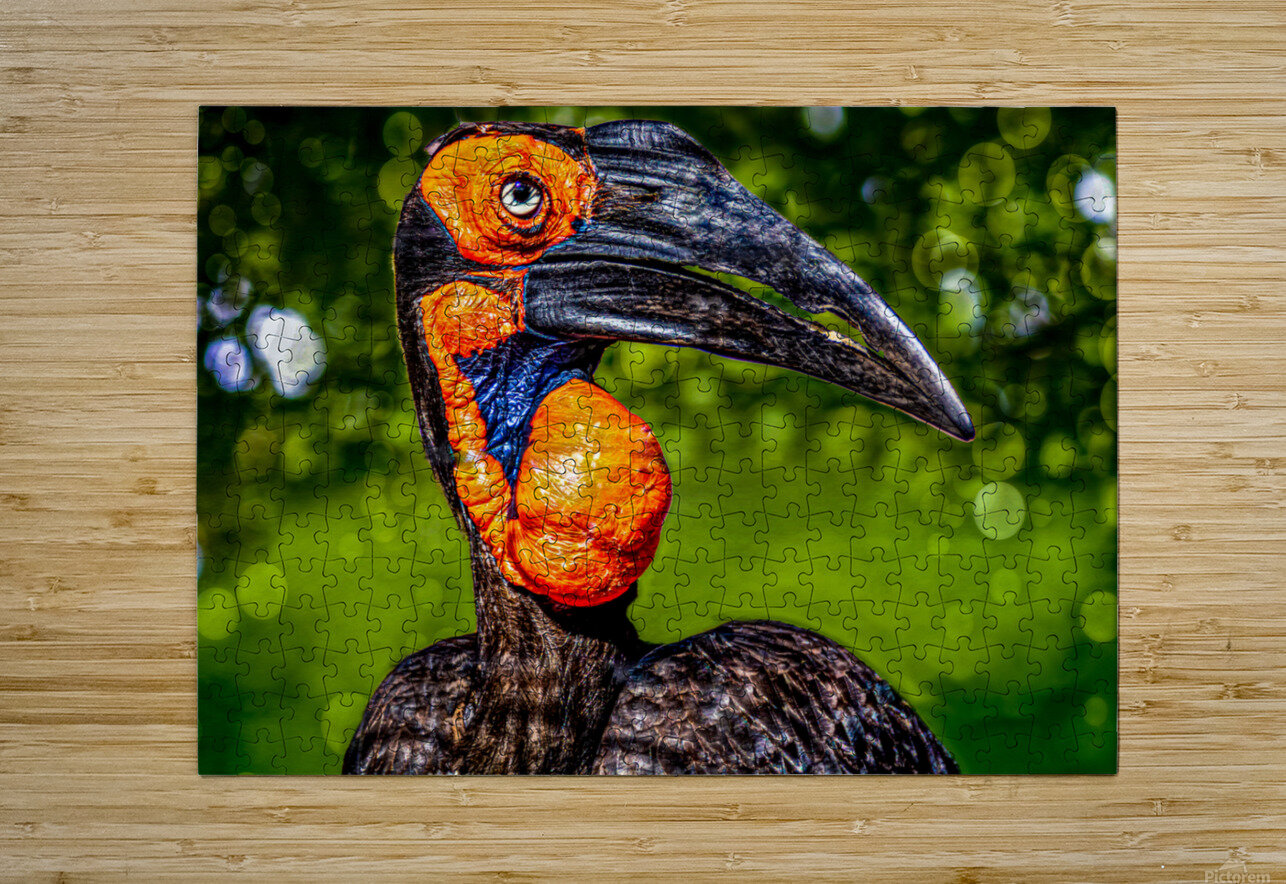 Ugly Bird  HD Metal print with Floating Frame on Back