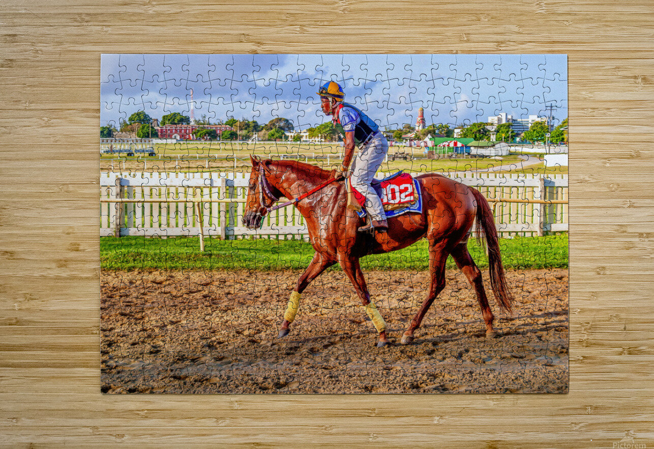 Racehorse05  HD Metal print with Floating Frame on Back