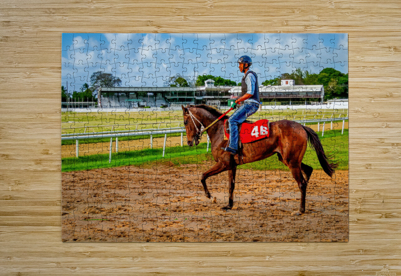 Racehorse04  HD Metal print with Floating Frame on Back
