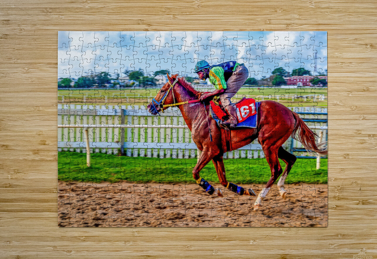 Racehorse10  HD Metal print with Floating Frame on Back