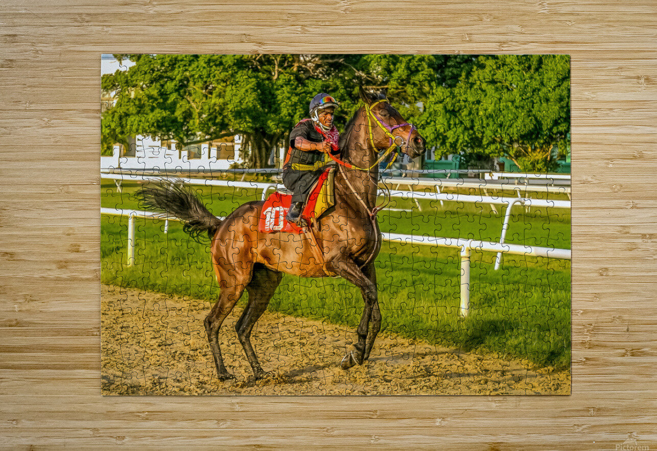 Racehorse12  HD Metal print with Floating Frame on Back