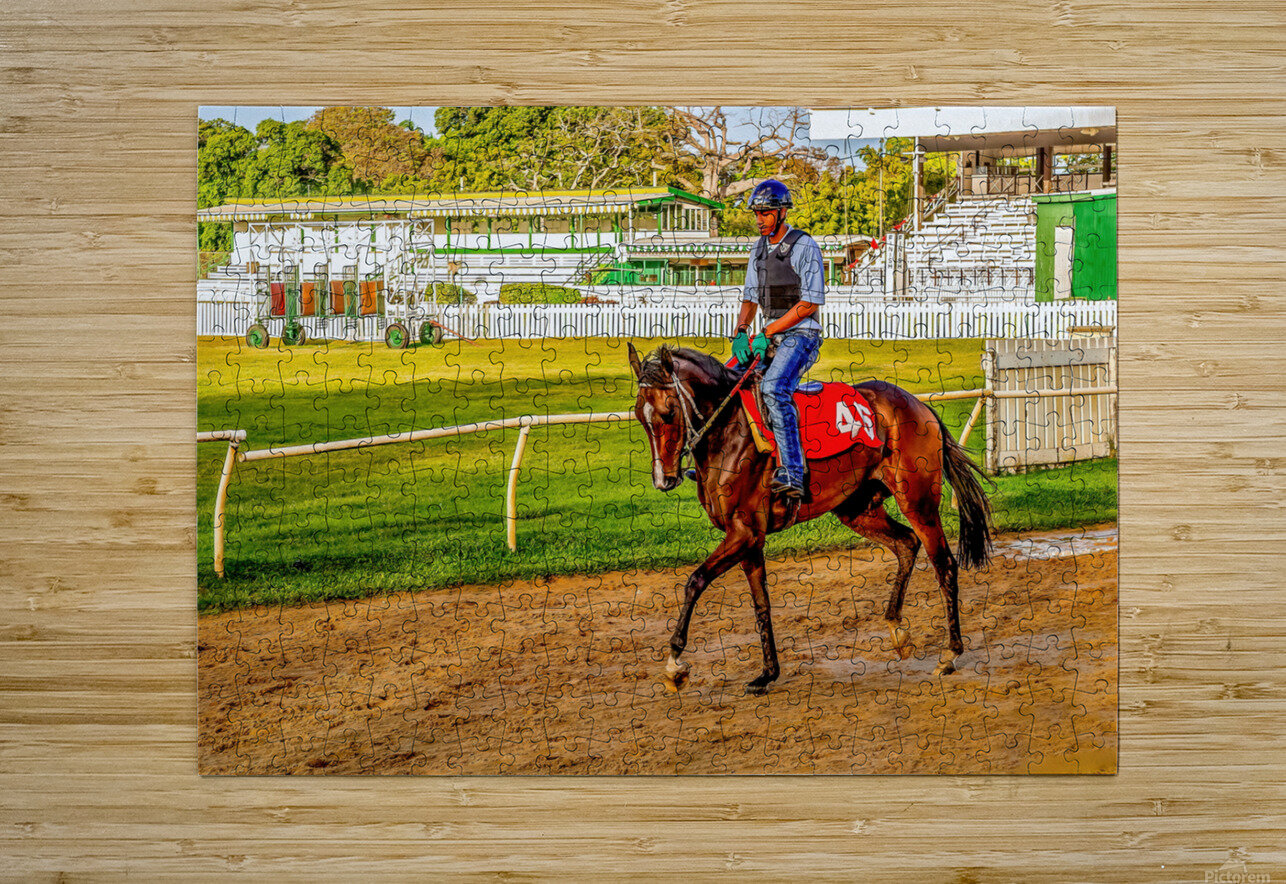 Racehorse03  HD Metal print with Floating Frame on Back
