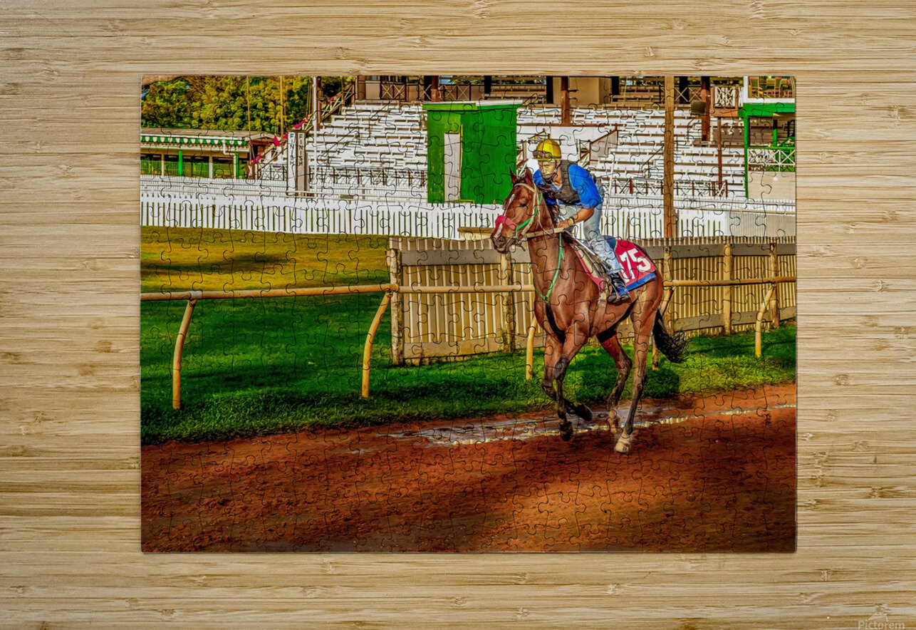 Racehorse02  HD Metal print with Floating Frame on Back