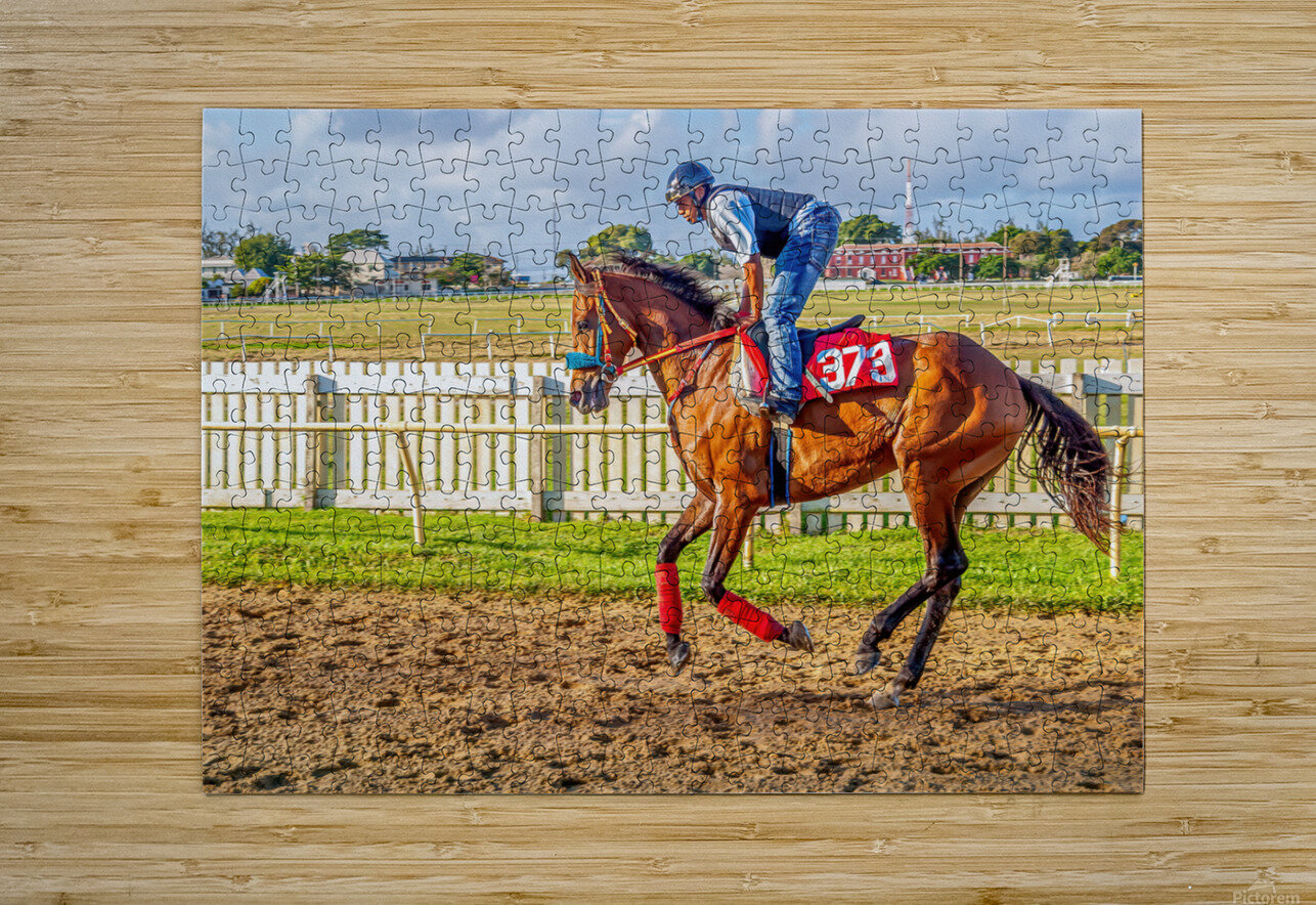 Racehorse06  HD Metal print with Floating Frame on Back