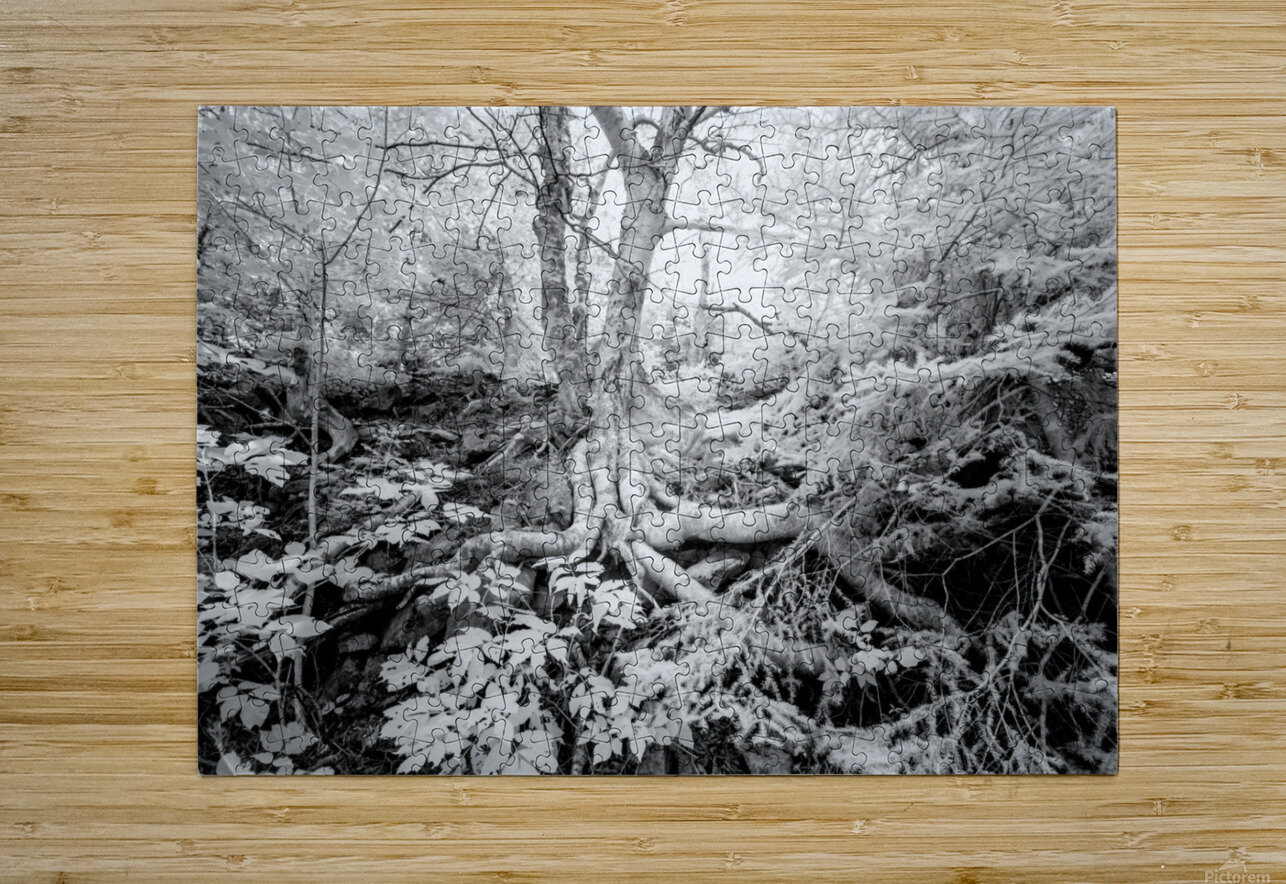 Roots  HD Metal print with Floating Frame on Back