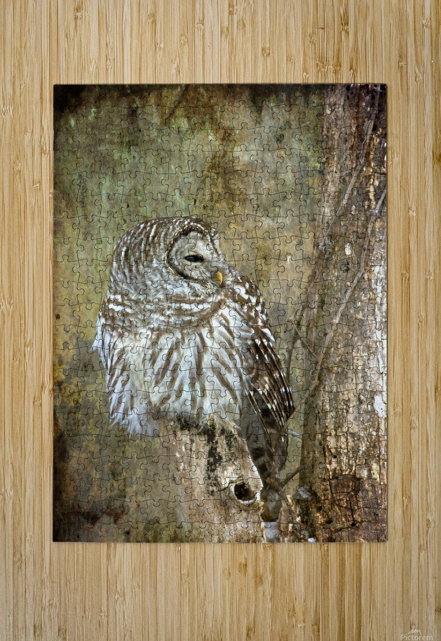 Grungy Owl  HD Metal print with Floating Frame on Back