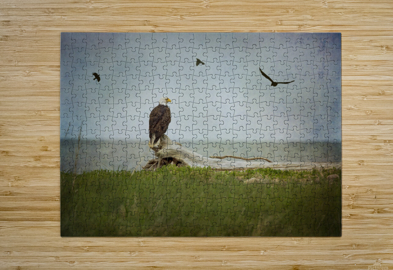 Bald Eagle on Tree Trunk  HD Metal print with Floating Frame on Back