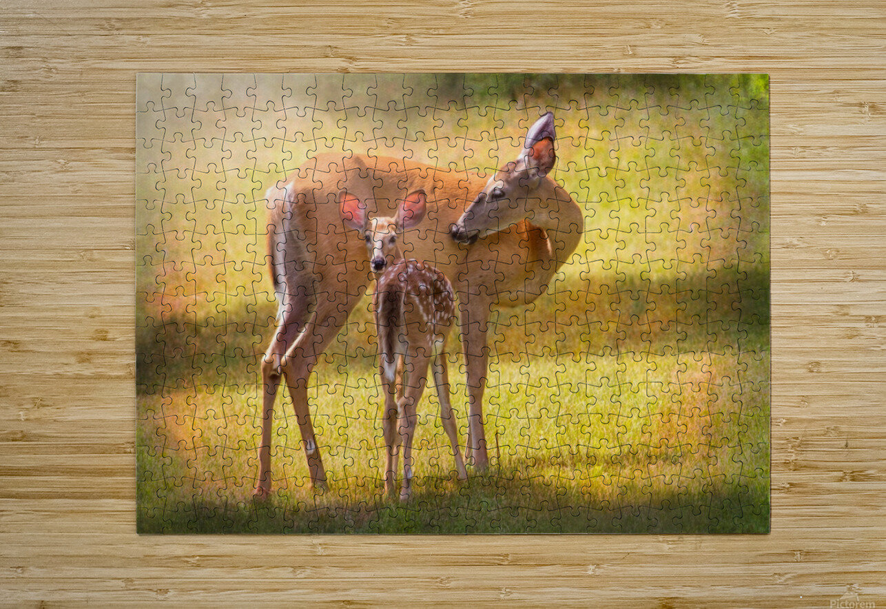 Doe with fawn looking back  HD Metal print with Floating Frame on Back