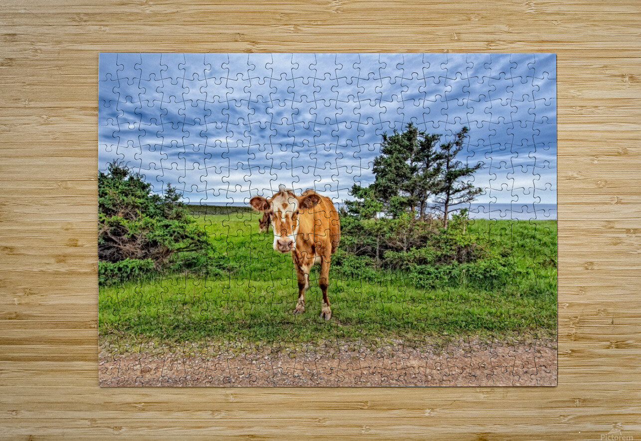 Moo  HD Metal print with Floating Frame on Back