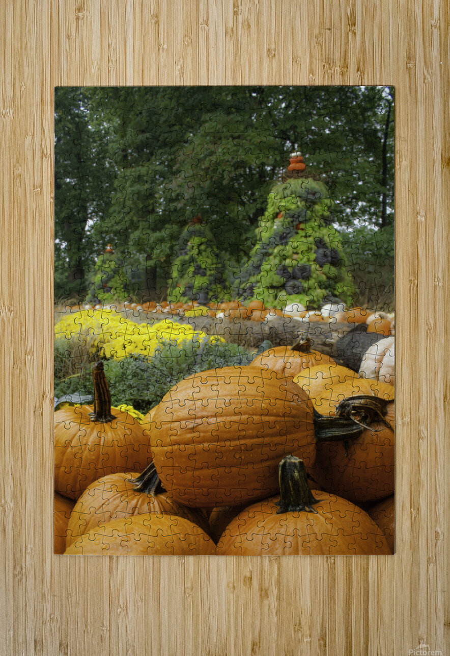 Pumpkins  HD Metal print with Floating Frame on Back