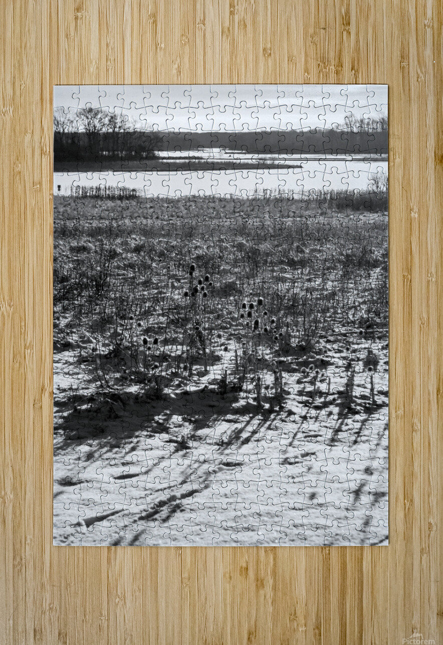 Cattails at Dawn  HD Metal print with Floating Frame on Back