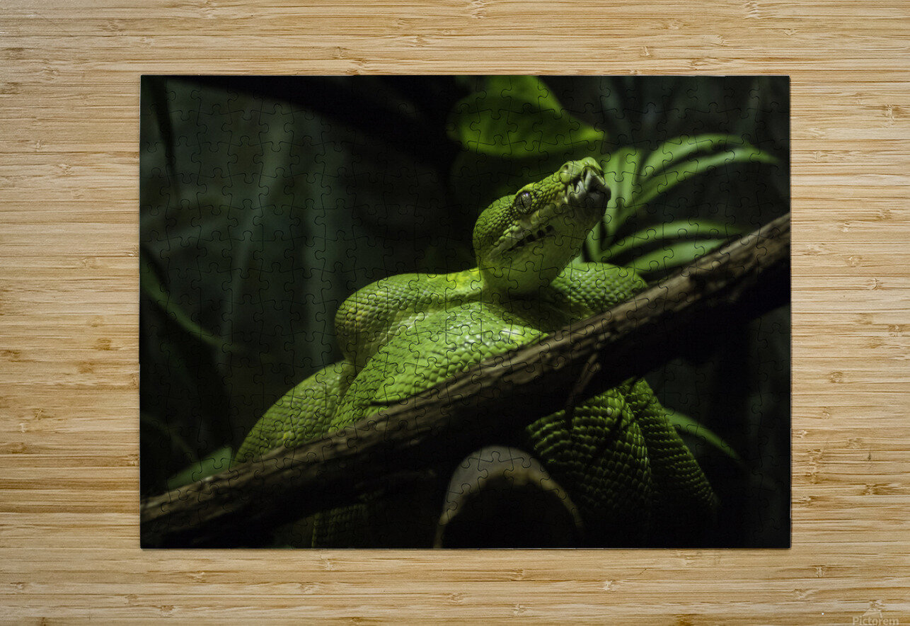 High Detail  Green Boa   HD Metal print with Floating Frame on Back