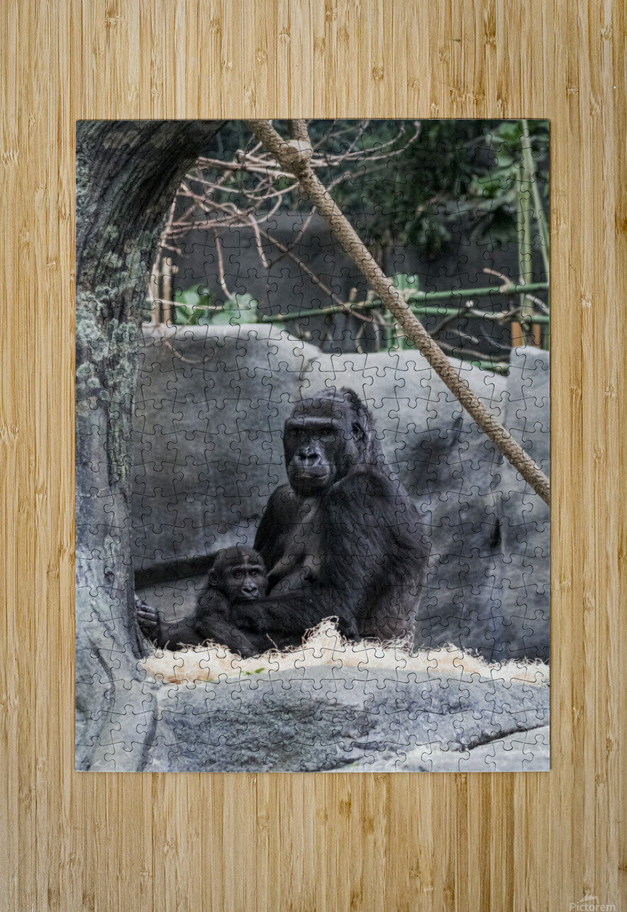 Baby Gorilla   HD Metal print with Floating Frame on Back