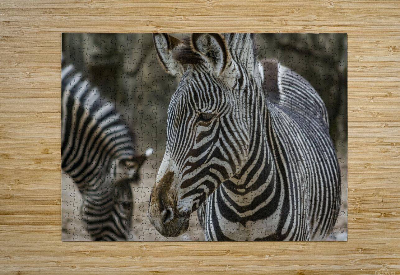 Stripes  Zebra   HD Metal print with Floating Frame on Back