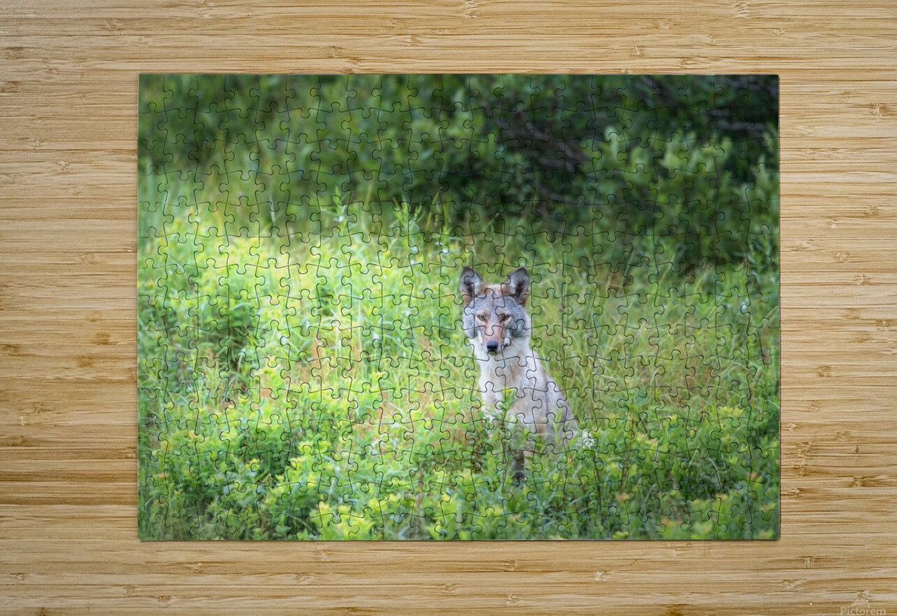 Sitting Pretty  HD Metal print with Floating Frame on Back