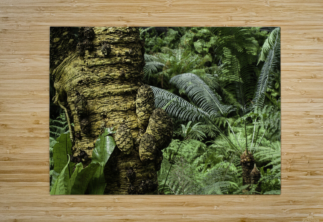 Trees Textures  HD Metal print with Floating Frame on Back