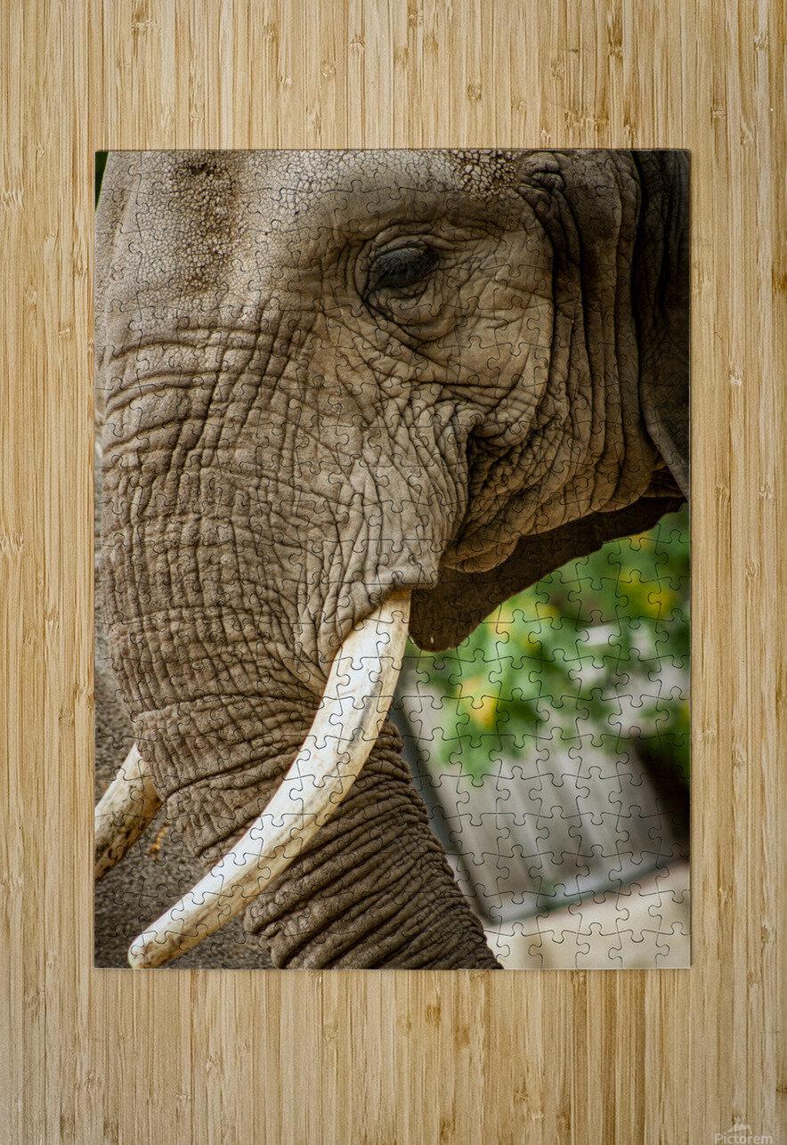 Wrinkles  Elephant   HD Metal print with Floating Frame on Back