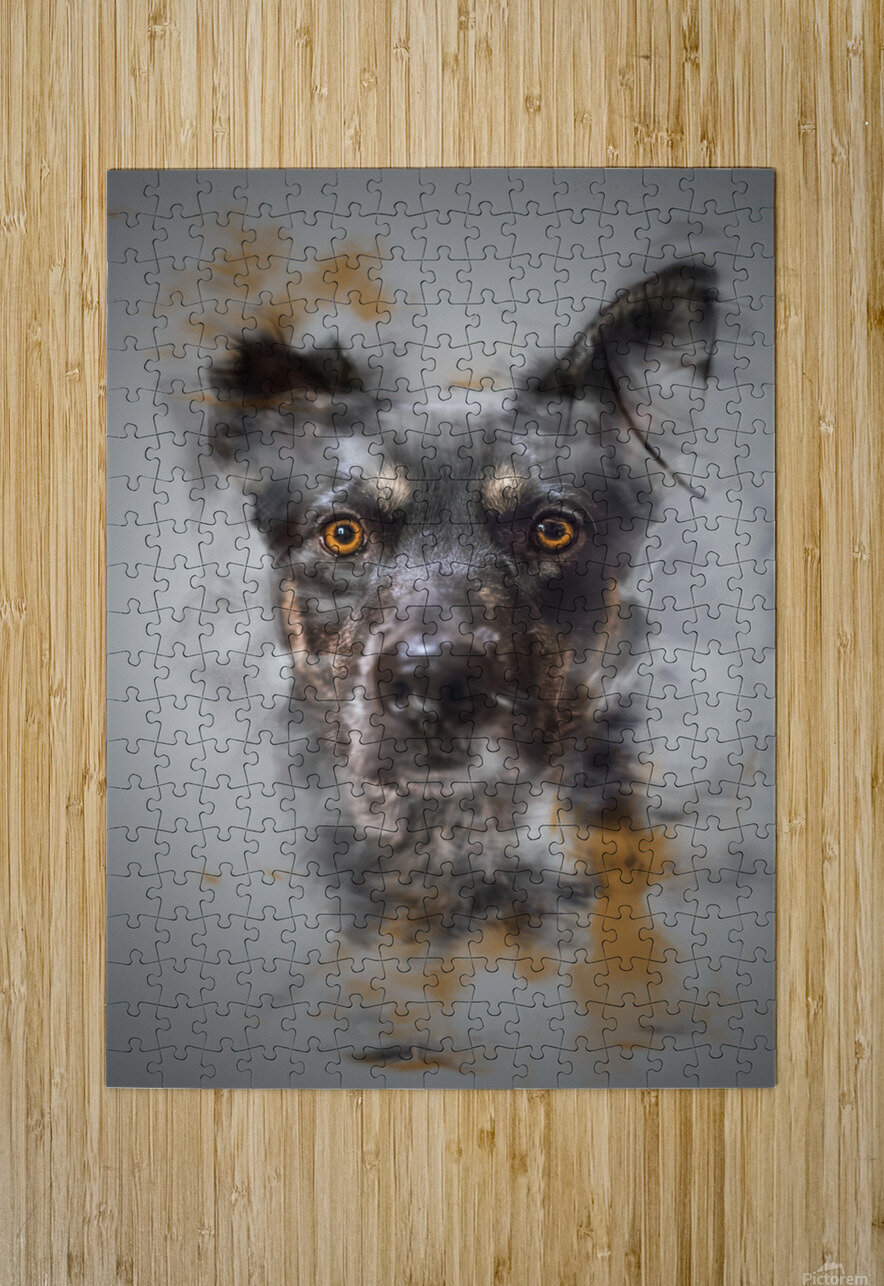 Chien  HD Metal print with Floating Frame on Back