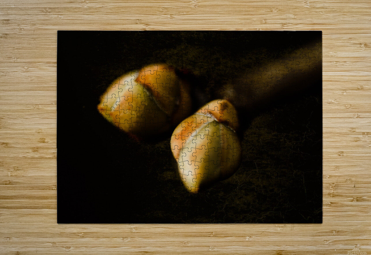 Buds  HD Metal print with Floating Frame on Back