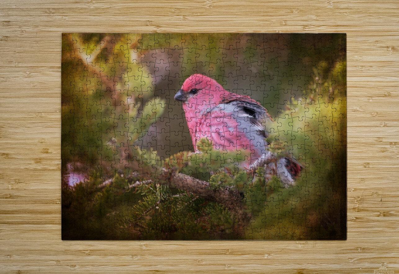 Male Pine Grosbeak  HD Metal print with Floating Frame on Back
